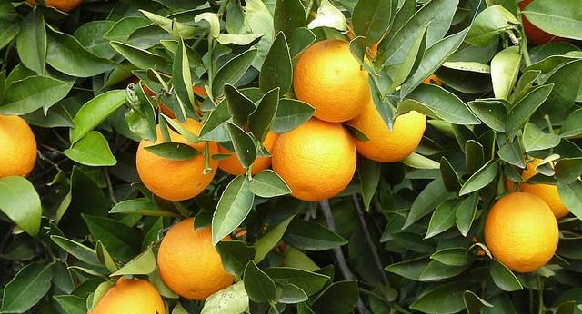 CA Citrus Mutual celebrates 40th anniversary