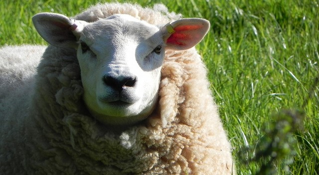 Wool and mohair workshops in January