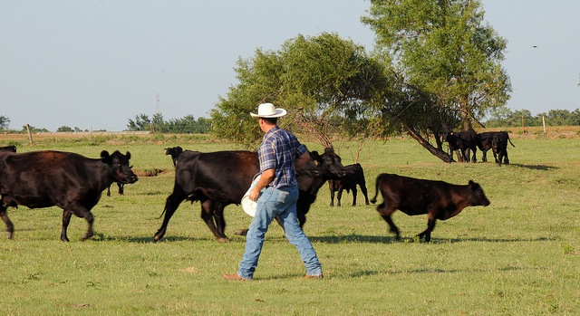 OKFB disappointed by state beef checkoff results