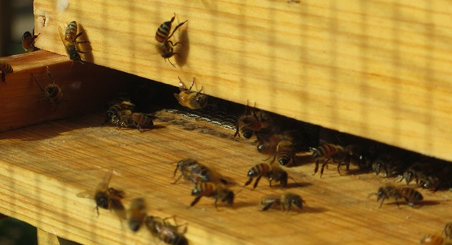 Winter Prep Your Hives