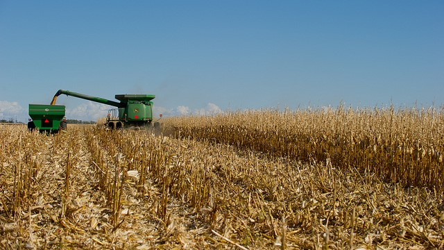 Drier trends aid U.S. corn harvest