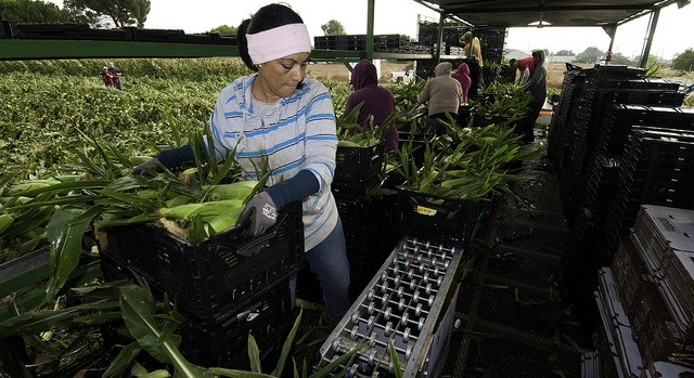 Calif. court upholds farmworker law
