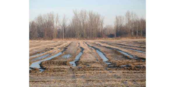 Deep ruts created by harvesting soybeans in wet soil conditions. (Photo by Mike Staton, MSU Extension)