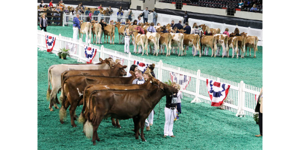 World's largest livestock expo wraps up