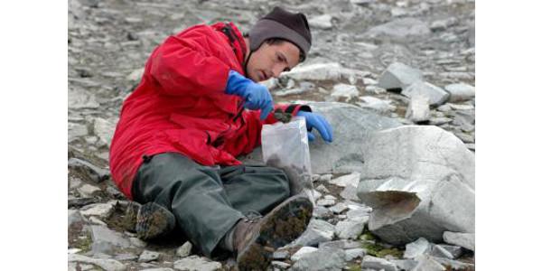 UK entomologist Nick Teets collects midges on a previous trip to Antarctica. (PHOTO: Peter Rejcek)