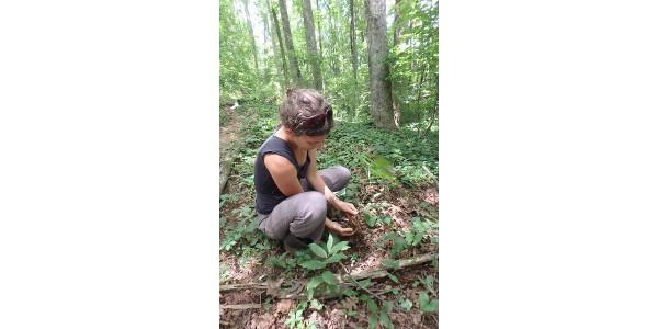 Wild-harvesting medicinal herbs