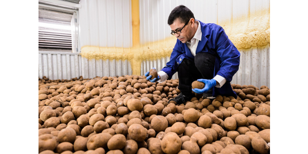 Sam Perez in a storage bin that holds about 200,000 pounds of potatoes. (Photo: Jeff Miller/UW-Madison)
