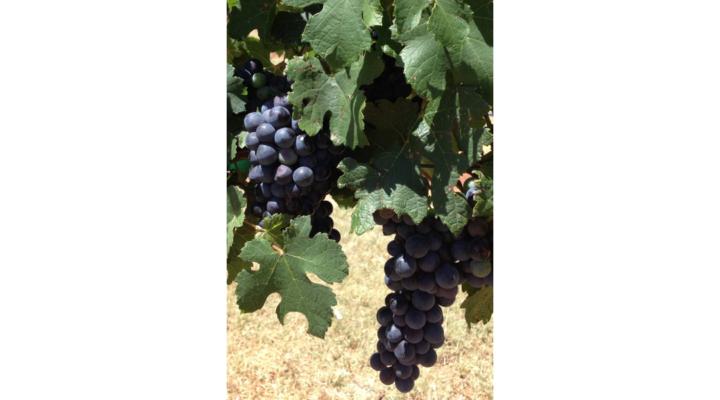 Prospective Grape Grower Workshop