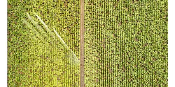 One day soon, tiny electronic sensors will take precision farming to the next level. (Courtesy of NC State University)