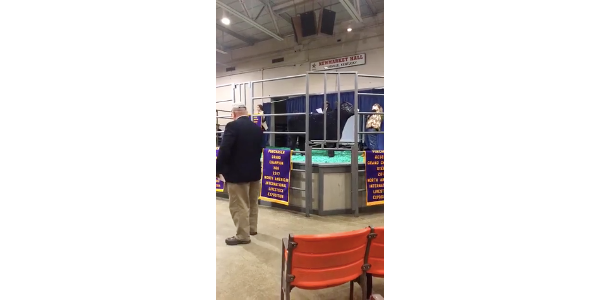 A screenshot from a live video of the sale broadcast November 16 on the North American International Livestock Exposition's Facebook page.