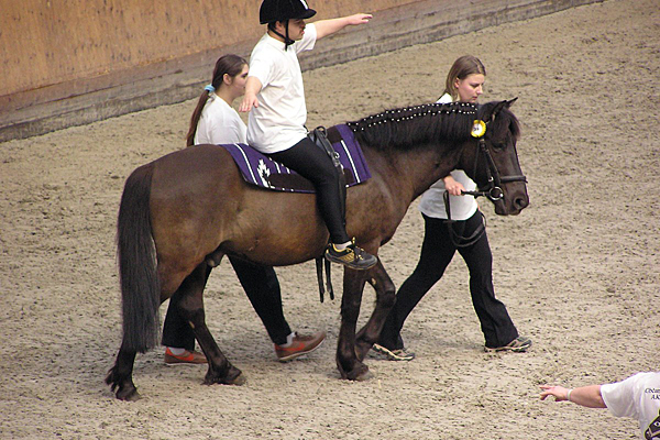 Rutgers study: Therapy horses are not stressed