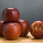 Winecrisp apple variety developed by Professor Schuyler Korban. (photo credit: David Riecks/University of Illinois)