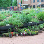 The Grant Beach Community Garden grows a bounty of healthy produce for neighborhood residents. (http://www.springfieldcommunitygardens.org/about-scg/our-story/