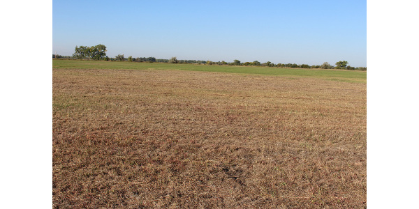 An area of subirrigated meadow in Lincoln County damaged from the feeding of grubs. (Photo courtesy of Jerry Volesky)