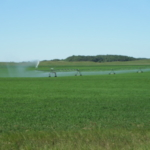 The number of irrigated acres in North Dakota increased from 190,000 in 1993 to more than 300,000 in 2016. (NDSU photo)