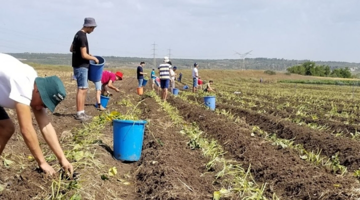 This farm's veggies are grown exclusively for charity