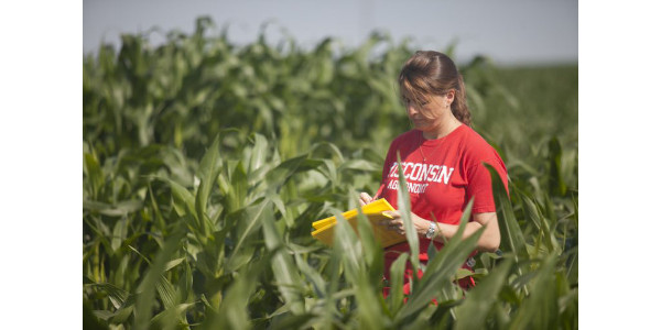 Natalia de Leon, Assistant Professor of Agronomy at UW-Madison and project lead at the Great Lakes Bioenergy Research Center, takes notes on experimental corn plots at the West Madison Agricultural Research Station. Natalia looks for differences in height, total biomass, color, disease, pollination time and other factors. (Photo: cornbreeding.wisc.edu)