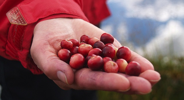 Can cranberries conquer the world?