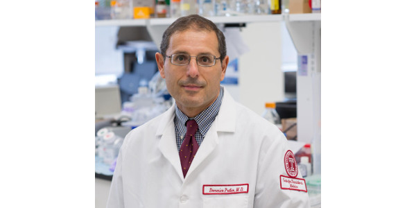 Domenico Praticò, MD, Professor in the Departments of Pharmacology and Microbiology and Director of the Alzheimer's Center at the Lewis Katz School of Medicine at Temple University, as well as senior investigator on the study. (Courtesy of Lewis Katz School of Medicine at Temple University)