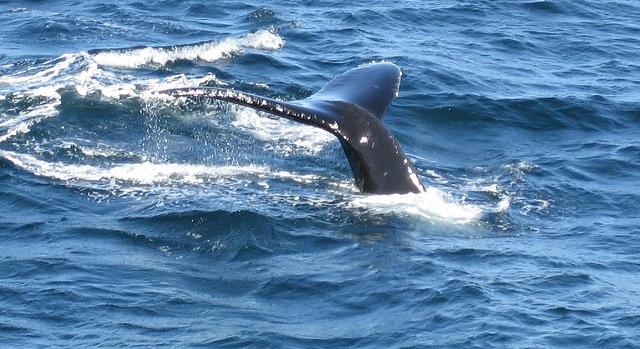 Final comments on ocean habitat plan