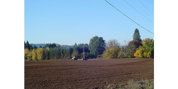 frost seeding