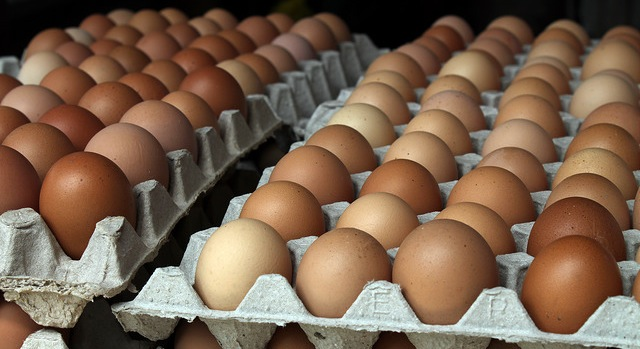 13 states challenge California egg law