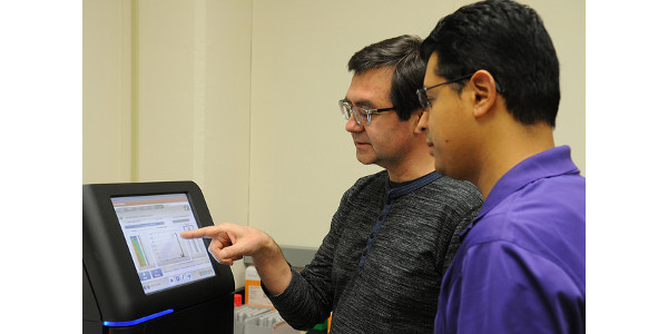 Kansas State University researchers Andres Salcedo (right) and Eduard Akhunov look over gene sequencing data from a recent study that identified a key mechanism that causes the devastating stem rust disease in wheat. (Courtesy of K-State Research and Extension)