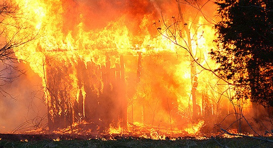 43 cows killed in barn fires