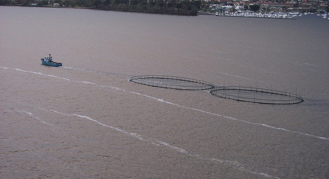 NOAA wants to fund more fish farming