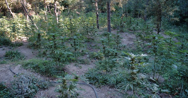 Legal pot brings host of environmental rules