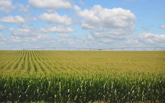 Nebraska Corn Board to meet