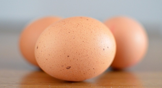 13 states sue Mass. over egg law