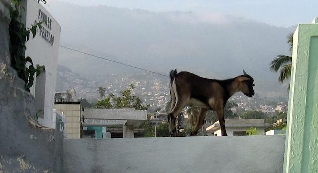 Troubled meat market in Haiti's capital