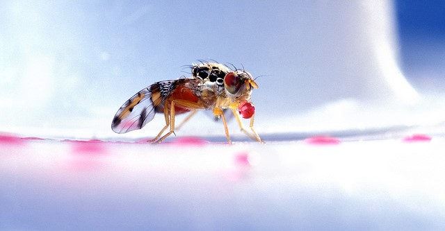 Medfly quarantine in San Mateo County