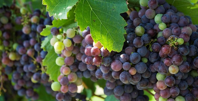 NY Wine & Grape Foundation to work with FCE