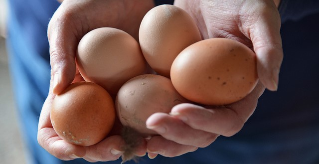 Okla. among states challenging Calif. egg law