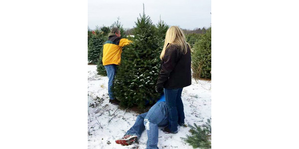 Tips for success with your first real Christmas tree