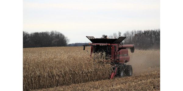 Producers, growers, and agronomists in northern Wisconsin and New York State are between a rock and a hard place as they wait for corn to dry down in the field, but face frequent moisture events and sloppy fields. (Courtesy of Rock River Laboratory)