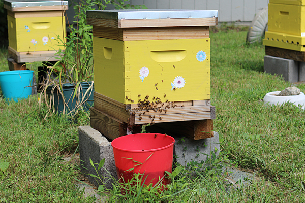 VSU offering Beekeeping for Beginners course