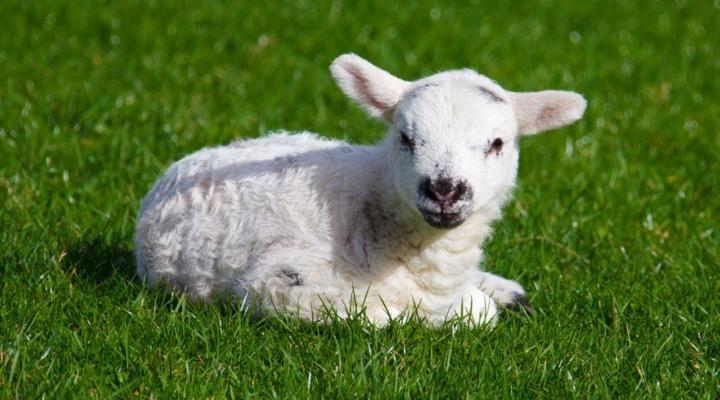 Lambing Workshop