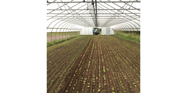 High tunnel planted to fall lettuce and spinach using the paper pot system. (Photo courtesy of Presque Isle Farm)