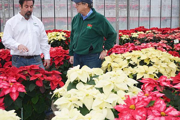 This festive plant is hitting peak season in N.J.