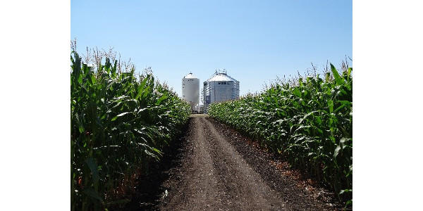 Advance corn hybrid selection with trial results