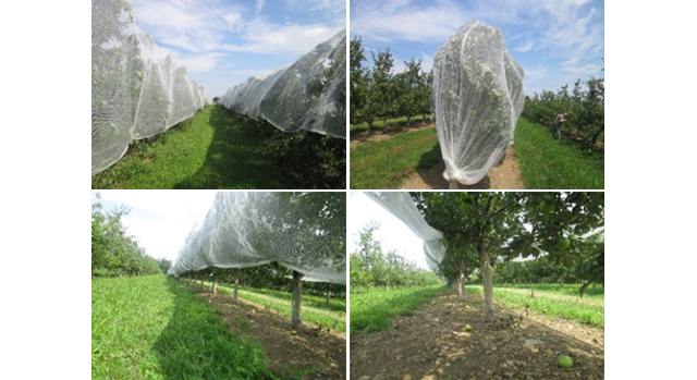 The Pros and Cons of Orchard Netting