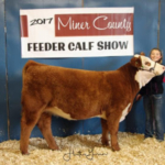 4-H Champion British Heifer was awarded to Canyon Kidd, Howard. Kidd was among a record number of open class and 4-H entries who turned out for the Miner County 36th Annual Feeder Calf Show held November 24, 2017 at the 4-H Grounds in Howard. (Courtesy Photo)