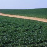 Topics at Nebraska Extension's 2018 crop production clinics will include soil fertility; soil water and irrigation; insect, disease and weed management; cropping systems; and agribusiness management and marketing. (Courtesy of UNL)