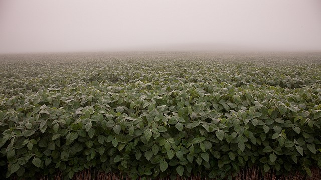Dicamba debate lingers in Arkansas courts