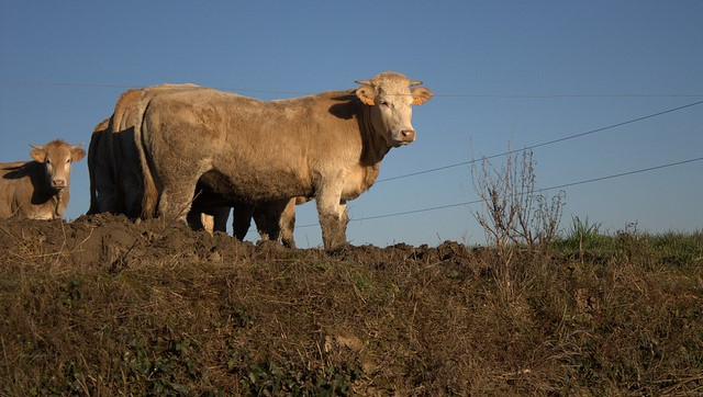 Faults in USDA Brazilian beef audit report