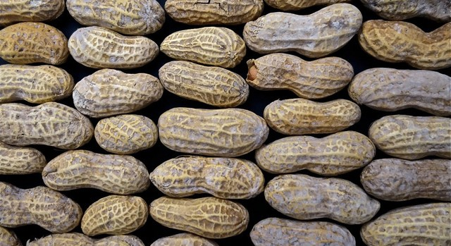 Scientists map the genetic code of the peanut