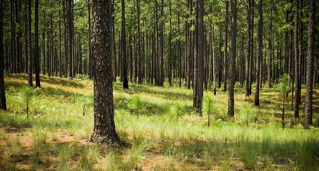 USDA invests in wildfire mitigation